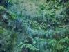 Levada Caldeirao Verde