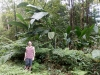 Inselrundfahrt Martinique