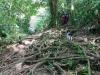 Regenwald auf Dominica