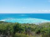 Culebrita-das-Riff-mit-Korallenkopfen_thumb.jpeg